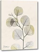 Sunkissed Eucalyptus 3 by Albert Koetsier - 29