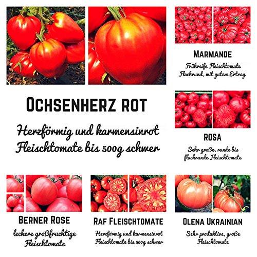 Bio- Tomatensamen-Set mit ausgewählten Fleischtomaten. 6 unterschiedliche Sorten inklusive der beliebten Ochsenherz-Tomate in Bio Qualität - Jede Sorte beinhaltet 10 Korn