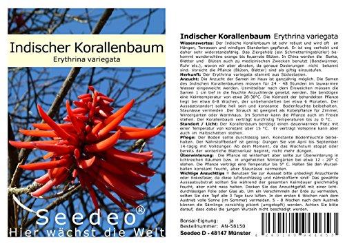 Seedeo® Indischer Korallenbaum (Erythrina variegata) 8 Samen
