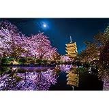 1000ピース ジグソーパズル KAGAYA 月夜に咲く(京都) 【光るパズル】(50x75cm)