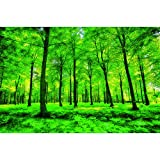GREAT ART Mural De Pared ? Bosque De Verano ? Abedules Glade Naturaleza Paisaje Relajación Sol Planta Flora Helechos Rama Forest Tree Foto Papel Tapiz Y Decoración (210x140 Cm)
