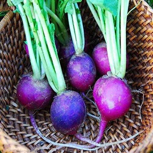 Shopvise Cherry Belle Radis Seeds 50 unités; couleur 7