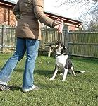 Company Of Animals Chien Pet Corrector 200 ml pour Interrompre les Comportements Indésirables #1