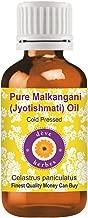 Deve Herbes Pure Malkangani (Malkangni/Jyotishmati) Oil (Celastrus paniculatus)100% Natural Therapeutic Grade Cold Pressed 30ml (1.01 oz)