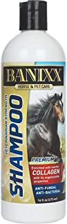 Banixx Medicated Anti-Fungal, Anti-Bacterial Shampoo