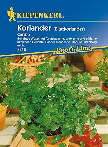 Koriander-Saatgut: Koriander 'Caribe', Coriandrum sativum - 1 Portion