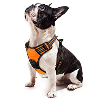 rabbitgoo Dog Harness,No-Pull Pet Harness with 2 Leash Clips,Adjustable Soft Padded Dog Vest,Reflective No-Choke Pet Oxford Vest with Easy Control Handle for Small Breed,Orange (S, Chest 15.7-27.6