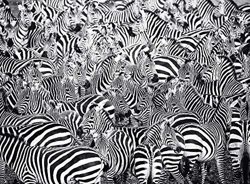 74Tdfc Puzzle 1002 Pezzi Adulti Bambini Giocattolo educativo Antistress per Regalo Illustrazione in Bianco e Nero della Zebra