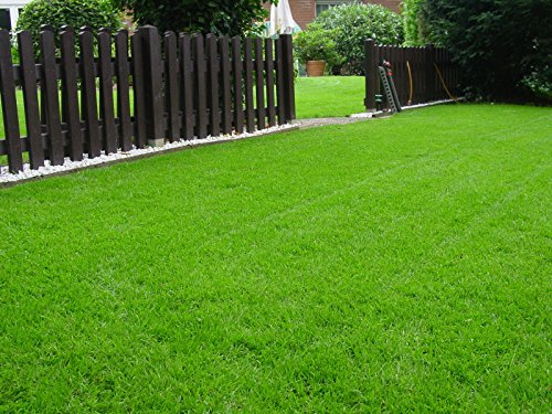 Rasen Sport und Spiel Grassamen Rasensamen Rasensaat Gras 2,5kg - Qualität zum fairen Preis