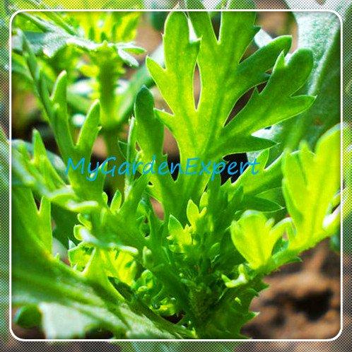 Nouvelle arrivée! 10pcs / Graines pack fée Succulentes anti-radiations, graines de cactus importées hybrides graines de bonsaï Floraison, # X8T6NG
