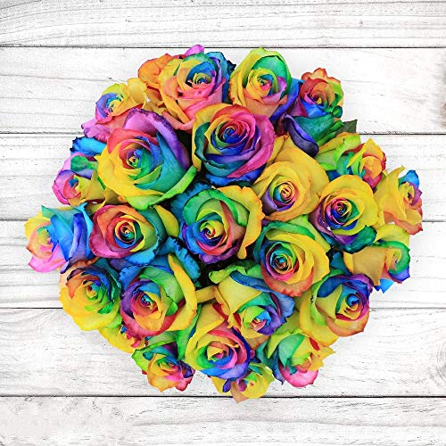 Rosaholics Rainbow Rose Bouquet with Multi Color Roses Ecuador Direct Farm to Door Delivery (Fresh-Cut-Flowers) - 12