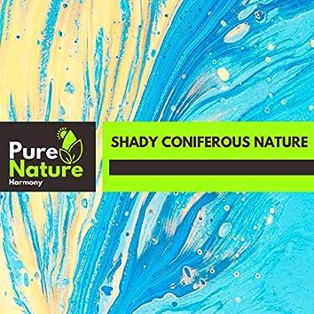 Shady Coniferous Nature