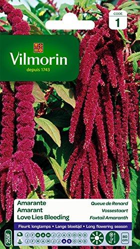 Vilmorin 5129841 Amarante Queue de Renard, Violet, 90 x 2 x 160 cm