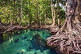 Amazonas Brasilien Wald Dschungel See XXL Wandbild Foto
