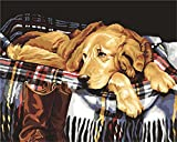 Paint by Numbers for Adults, Komking DIY Oil Painting Paint by Number Kits with Brush Canvas, Waiting Dog 16x20inch