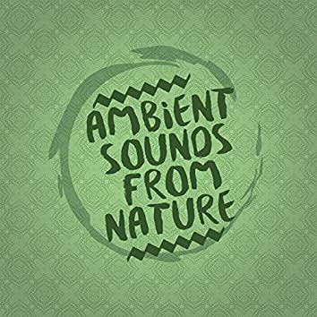 Ambient Sounds from Nature