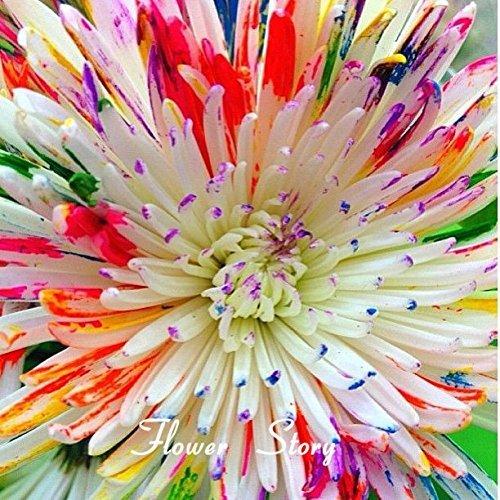 50 Water Color Daisy Graines belle arc-en-marguerites d'aquarelle Natural DIY Flower Garden Livraison gratuite