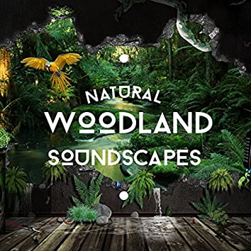 Natural Woodland Soundscapes
