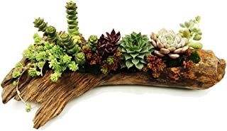 Succulent Planters Cactus Plant Pots Indoor Samll Flower and Aloe Vera Plants Pots Containers Pine Tree Root Wood Natural Shape Planters with A Hole Plants not Included