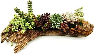 Best succulent planter wood Reviews