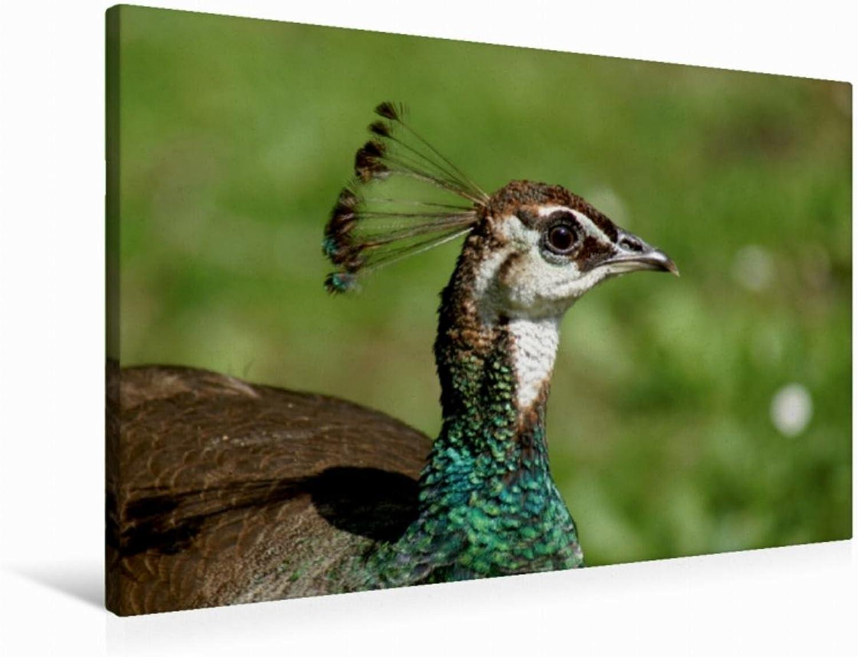 Calvendo Premium Textil-Leinwand 90 cm x 60 cm quer Pfauen Weibchen   Wandbild, Bild auf Keilrahmen, Fertigbild auf echter Leinwand, Leinwanddruck  Vgel und Tiere Tiere Tiere