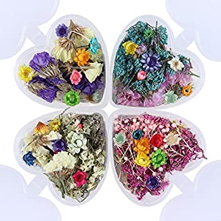 Best diy dried flower nails Reviews
