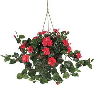 Best hibiscus hanging basket Reviews