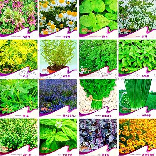 100pcs / sac Rosemary Seeds Diy Garden Bonsai Plante facile à cultiver Herb, Graines de légumes sains