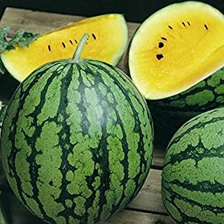 yellow doll watermelon