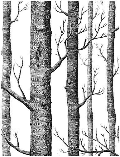 "Birch Tree Peel and Stick Wallpaper - Backsplash Peel Stick or Wall Paper, Prepasted Wall Paper or Adhesive Shelf Paper - Black and White Wood Stick Wallpaper - 17.71"" Wide x 393"" Long"