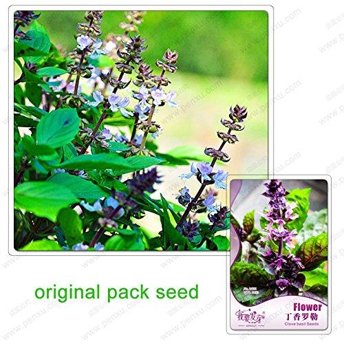 35 graines / Pack, graines de girofle basilic, basilic, plantes de jardin de bonsaïs Graines de fleurs, plantes Balcon bonsaïs