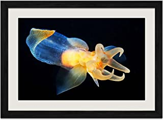 Beautiful Marine Life - Art Print Wall Black Wood Grain Framed Picture(24x16inch)