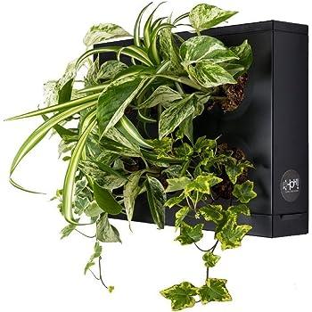 Mini Jardin Vertical Negro para 6 Plantas con Sustrato Natural Premium e Instrucciones. Cuadro Vegetal, Maceta de Pared, Maceta para Colgar.: Amazon.es: Jardín