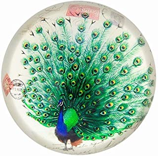 World Buyers Nature Under Glass Paperweights (Peacock)