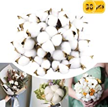 BcPowr 30PCS Natural Cotton Bolls Balls, Dried Cotton Balls, for Wreaths, Decor, Off Stick Branches Wired raw Look White Cotton Branch Picks Great for Crafting Farmhouse Style.