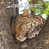 Sweet Dreams (BK) 224019 2019: Broschürenkalender mit Ferienterminen. Süß schlafende Tiere. 30 x 30 cm