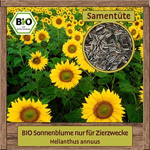 BIO Sonnenblume Samen Sommerblume (Helianthus annuus) Blumensamen Gute Gründüngung- Bienenpflanze
