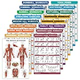 17 Pack - Exercise Workout Poster Set: Dumbbell, Suspension, Kettlebell, Medicine Ball, Battle Rope, Resistance Bands, Stretching, Bodyweight, Barbell, Yoga and More (PAPER - NOT LAMINATED, 18' x 27')