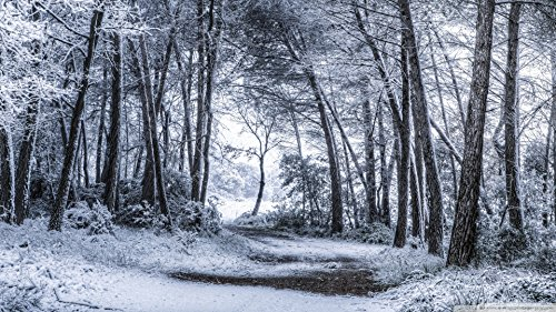 SNOWDEN: The manhunt (English Edition)