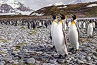 DMFNGJSD 数字油絵 フレームレス 、数字キット塗り絵 手塗り DIY絵-ペンギンのグループ-デジタル油絵 40x50 cm