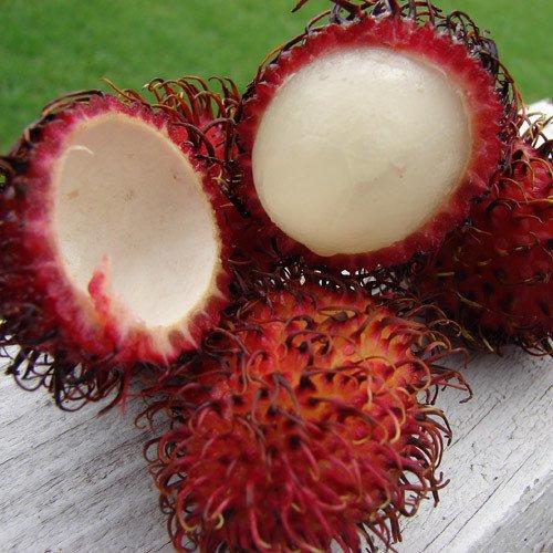 Plant World Seeds - Rambutan Seeds