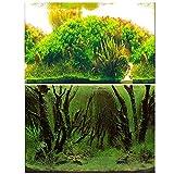 Amakunft 50 cm de alto x 62 cm de ancho, adhesivo para fondo de acuario, plantas de agua, doble cara, papel pintado para tanque de peces