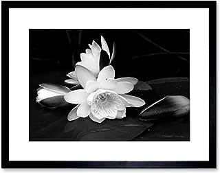 White Flower Bloom Black Background Framed Art Print Picture B12X9435
