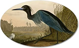 CafePress - Audubon Blue Crane Heron from Birds of America Wal - 20x12 Oval Wall Decal, Vinyl Wall Peel, Reusable Wall Cling