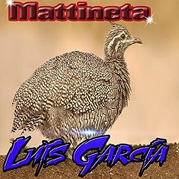 Mattineta