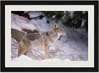 Lone Wolf in the Snow - Art Print Wall Black Wood Grain Framed Picture(24x16inch)
