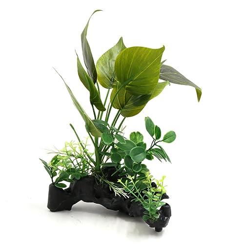 Plants for Turtle Tanks: Amazon com