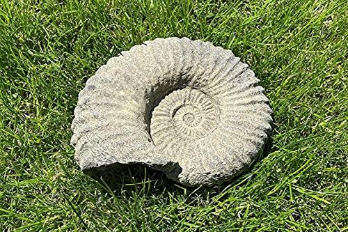 SpiceRack Estatua de Piedra fósil de amonita  Adorno de jardín inglés de Dinosaurio Antiguo al Aire Libre