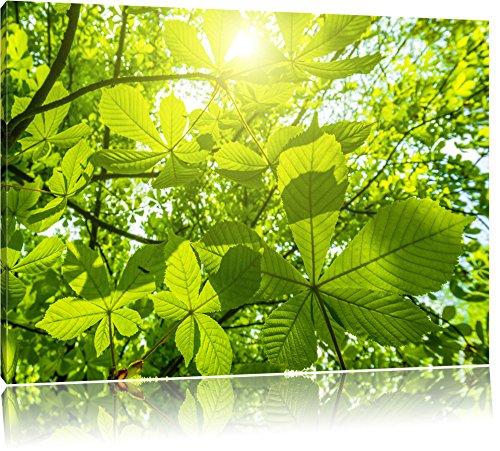 Grüne Blätter Bild auf Leinwand, XXL riesige Bilder fertig gerahmt mit Keilrahmen, Kunstdruck auf Wandbild mit Rahmen, guenstiger als Gemaelde oder Bild, kein Poster oder Plakat, Format:80x60 cm