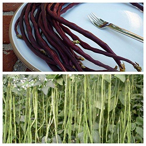 Meterbohne, Spargelbohne, Gemüse aus Ungarn, 10 Rote + 10 Grüne Samen, hu-öko-01